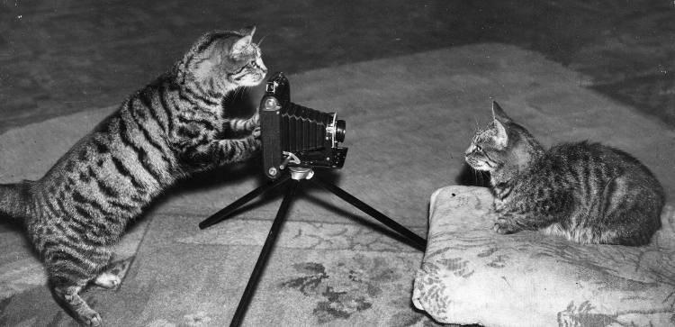 test visivo animali