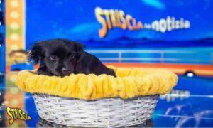 Striscia La Notizia cani