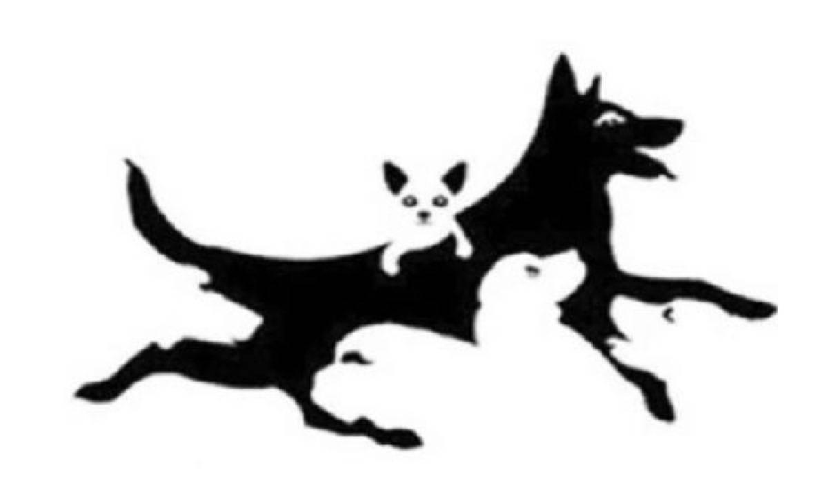 Test: quanti cani vedi? Ecco la tua età mentale